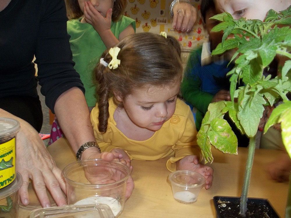 Curriculum-1-girl-looking-at-plant